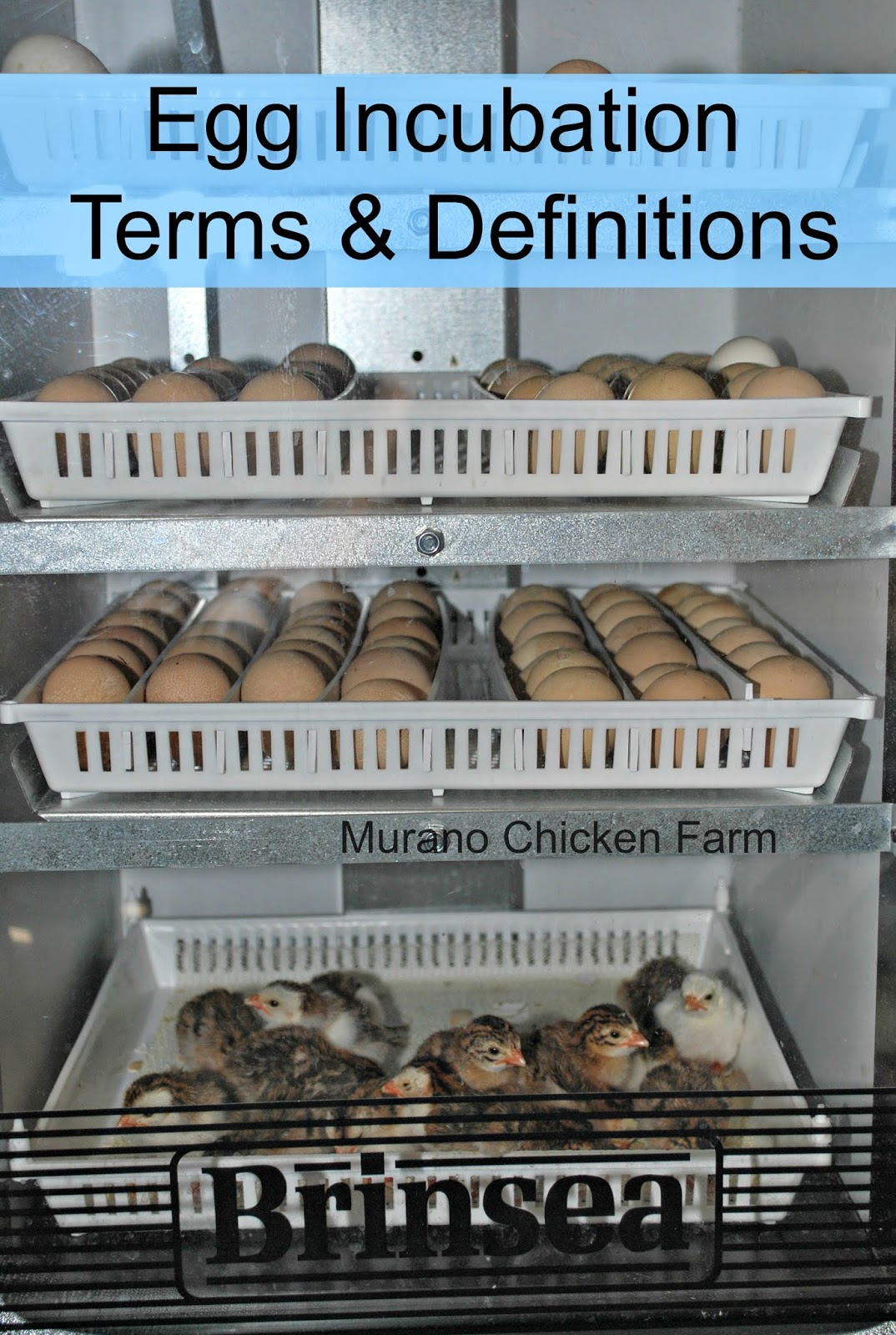 egg incubation terms & definitions