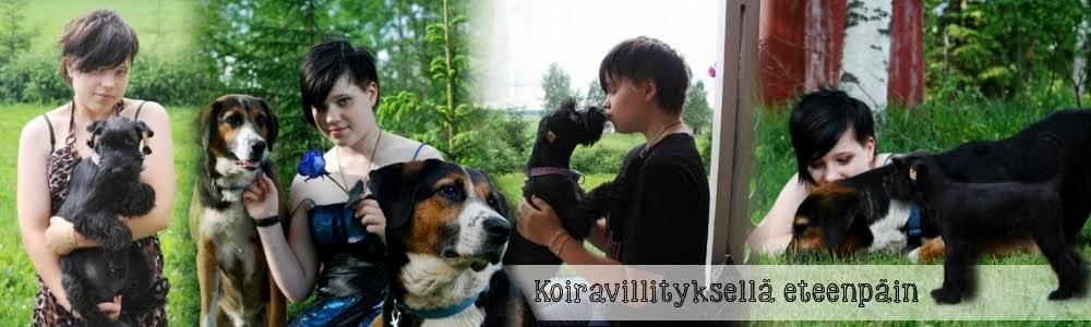 Koiravillityksellä eteenpäin