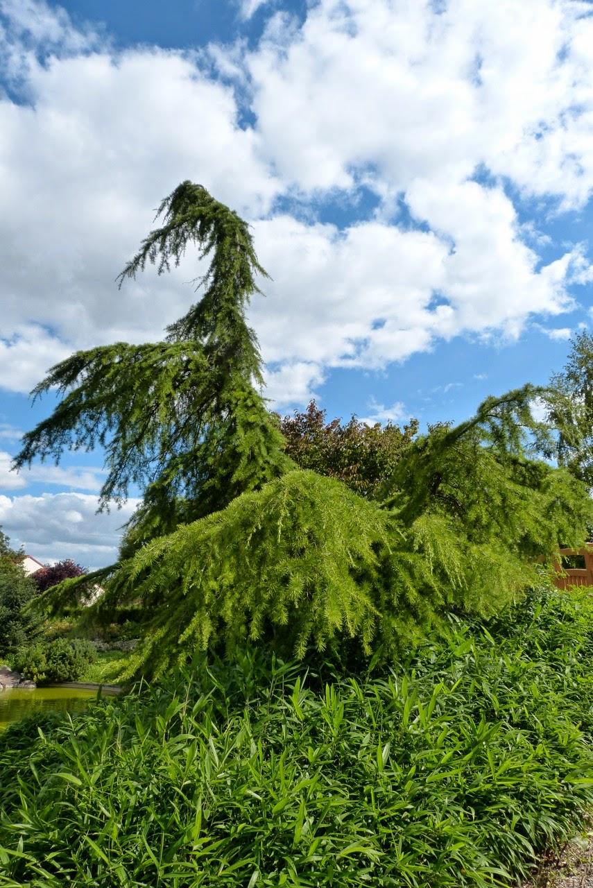 Truffe et compagnie les jardins dijonnais le jardin for Jardin japonais dijon