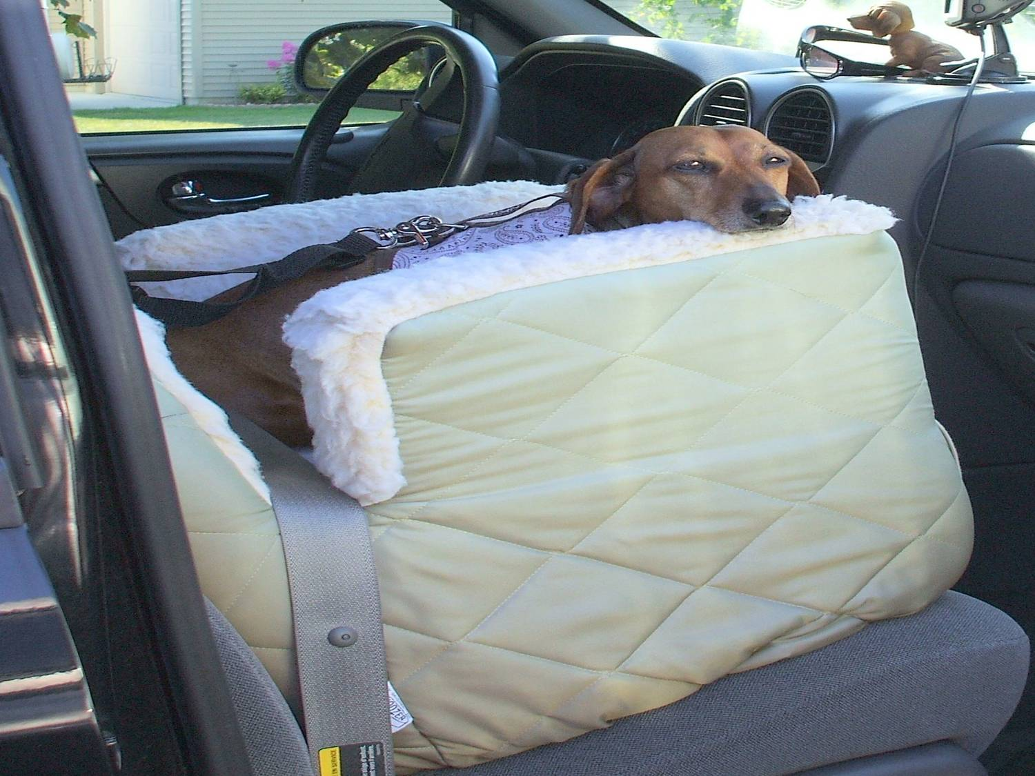 I Get Strapped In Just Like You Would Put Your Seat Belt On Heres A Photo Of Me My Doggie Car