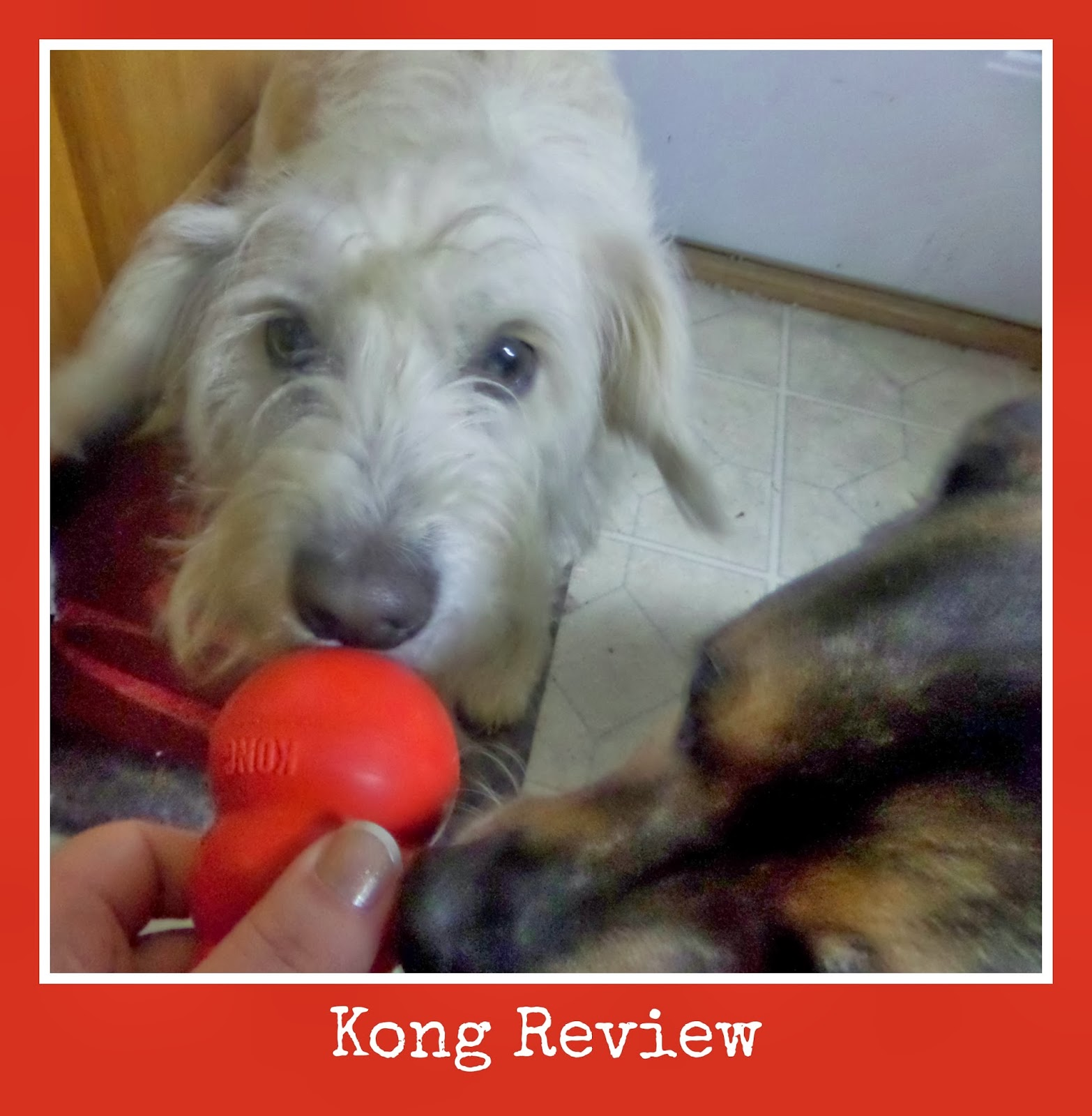 Kong Review and Giveaway