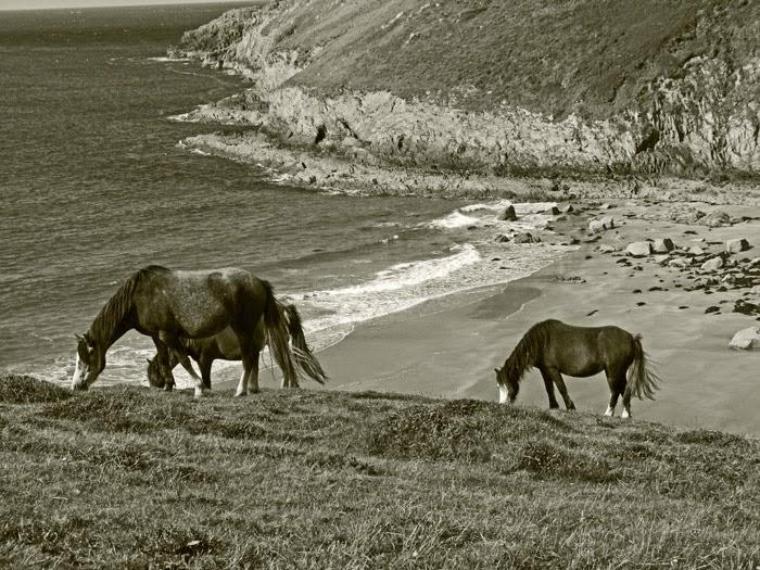 Ponies, Pembrokeshire, Wales