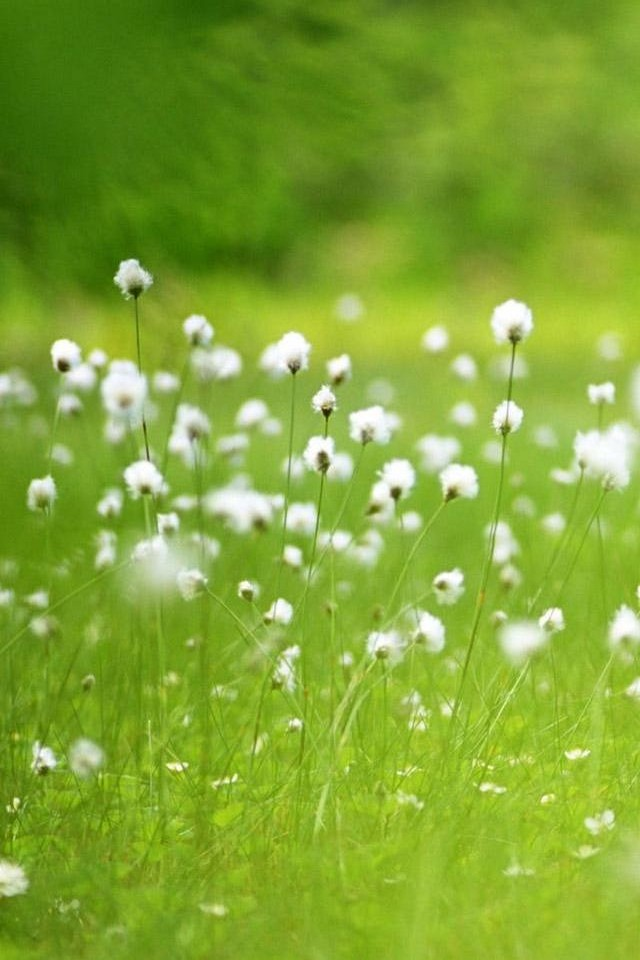 Free iphone wallpapers hd cute white flowers hd cute white flowers hd mightylinksfo