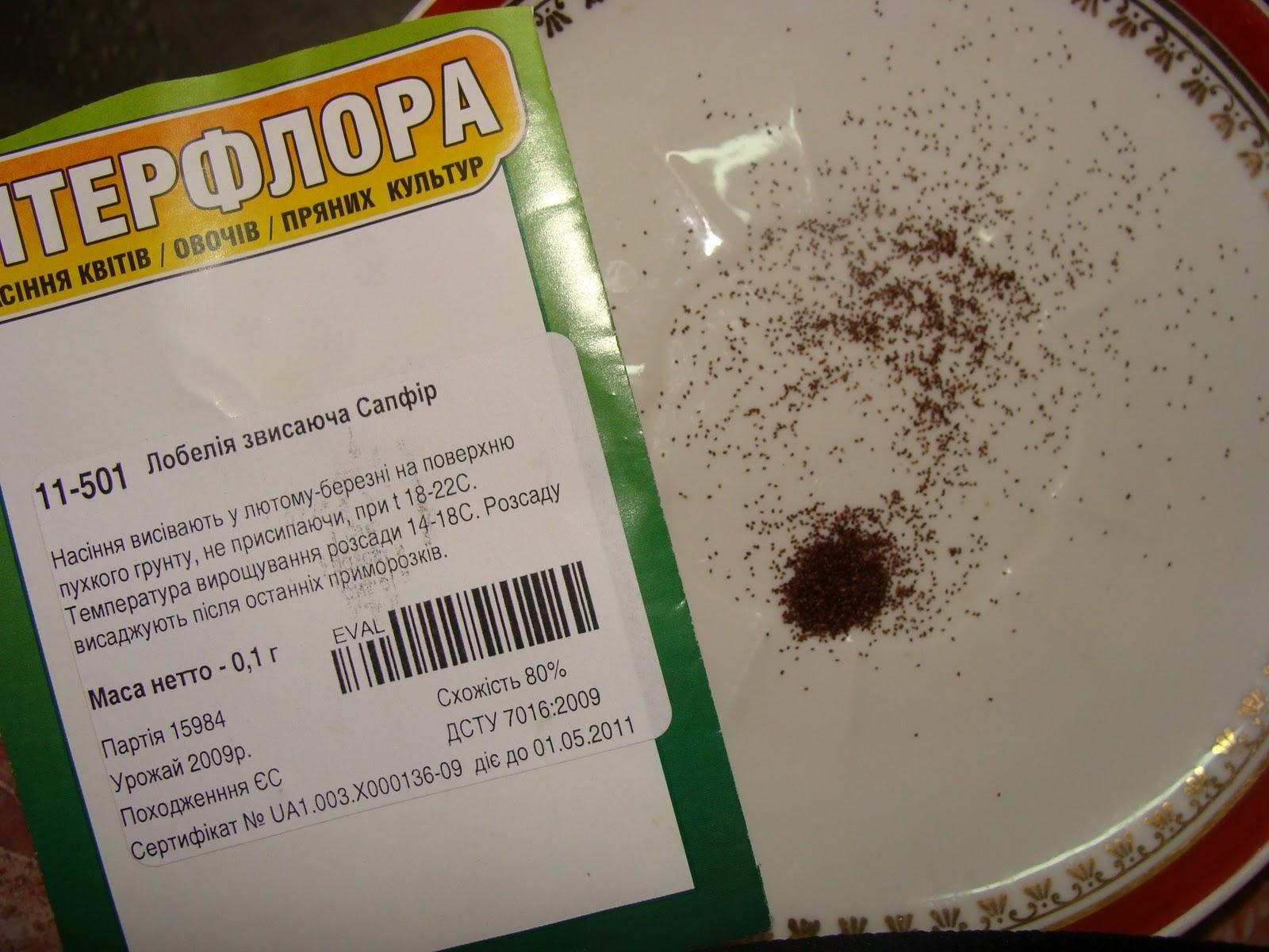 Выращивание лобелии из семян. Посадка и уход в домашних условиях 62