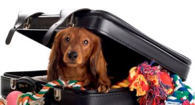 viajar con mascotas vuelos aerolineas