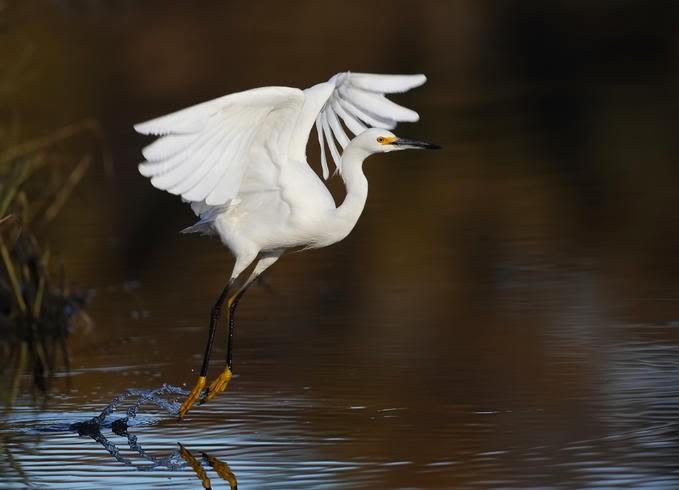 Vũ điệu của các loài chim