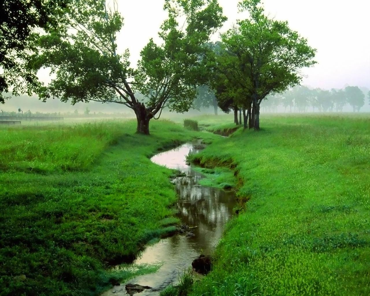 http://1.bp.blogspot.com/-0XGtg0fARfs/T77IVFDREaI/AAAAAAAAE2E/zC4V9t7lqlw/s1600/Green-Wallpaper-green-19662591-1280-1024.jpg