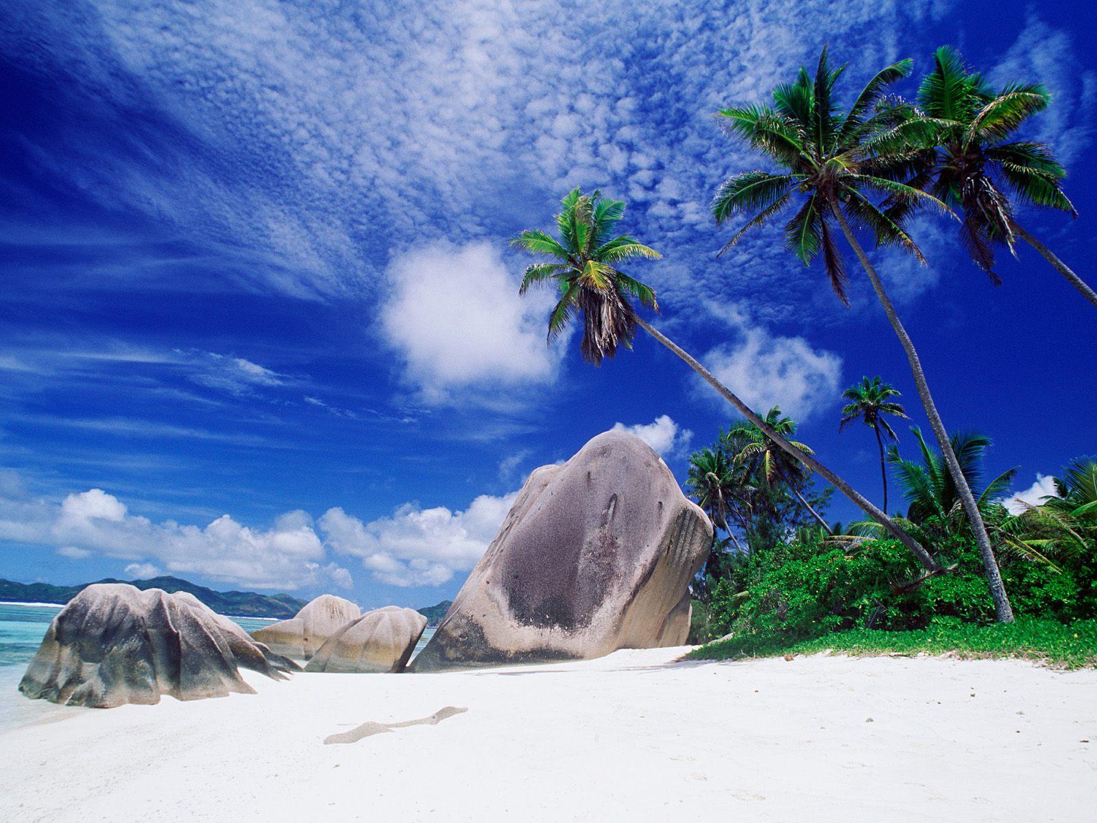 http://1.bp.blogspot.com/-0X_DYK6E08A/TY0HbMqtS7I/AAAAAAAAAXc/7n5pWaks0MU/s1600/landscapes_desktop_wallpaper-171903palm_tree_beach%255B1%255D.jpg