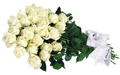 MIND: Mawar Putih