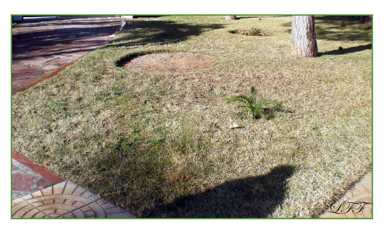 Pensando jardines c spedes y gramas - Semillas de gramon ...