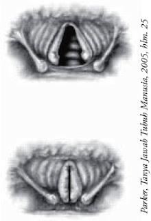 Pita suara memisah untuk bernapas (atas) dan ditarik bersama untuk berbicara (bawah)