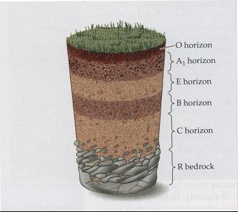 Profil penang dari horizon tanah