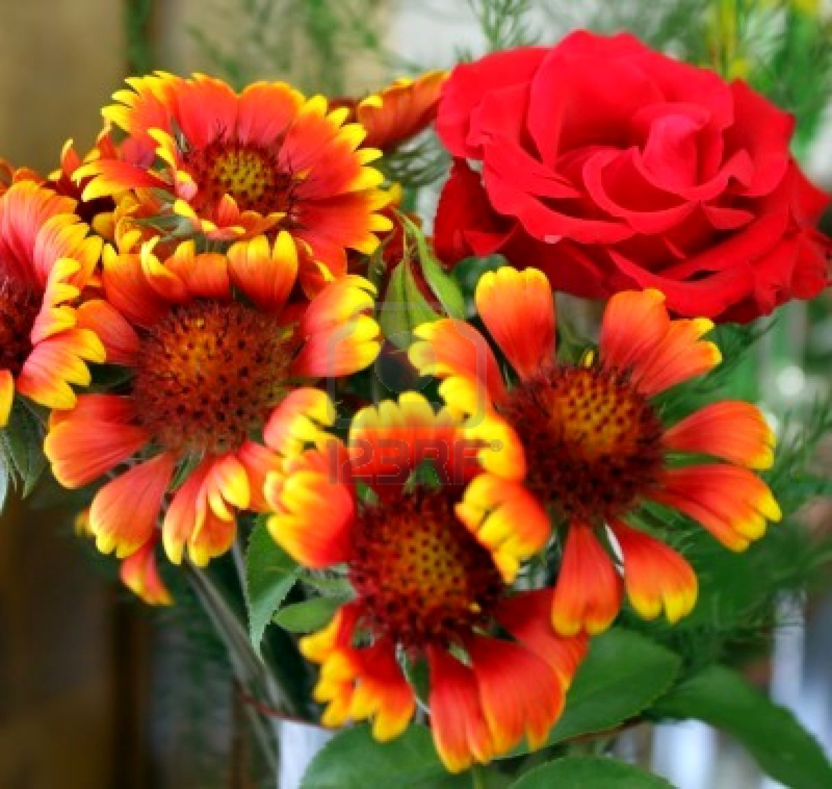 free flowers photo and wallpapers red rose flowers pictures, Beautiful flower