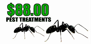 $88 ant treatment coupon