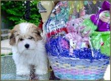 Viola at Easter