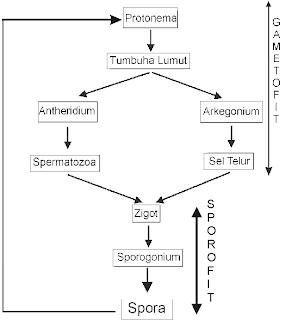 reproduksi, metagenesis