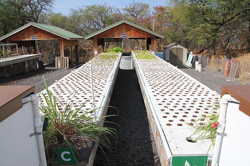 Aquaponics commercial aquaponics hydroponics grow for Hydroponic grow bed