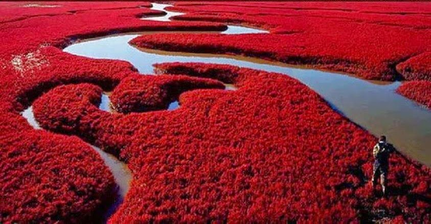 Red Beach - Panjin  (Cina)