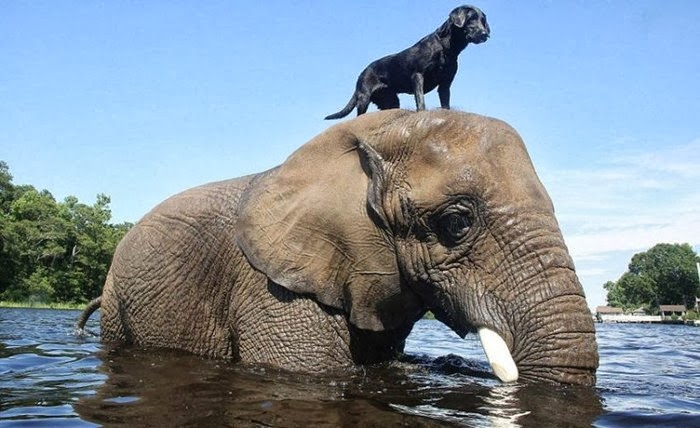 The unlikely friendship between a dog and an elephant