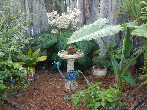 dragonfly garden cypress eucalyptus