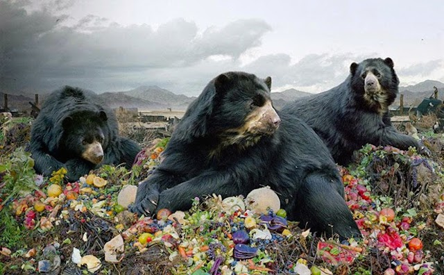 Until the Kingdom Comes de Simen Johan