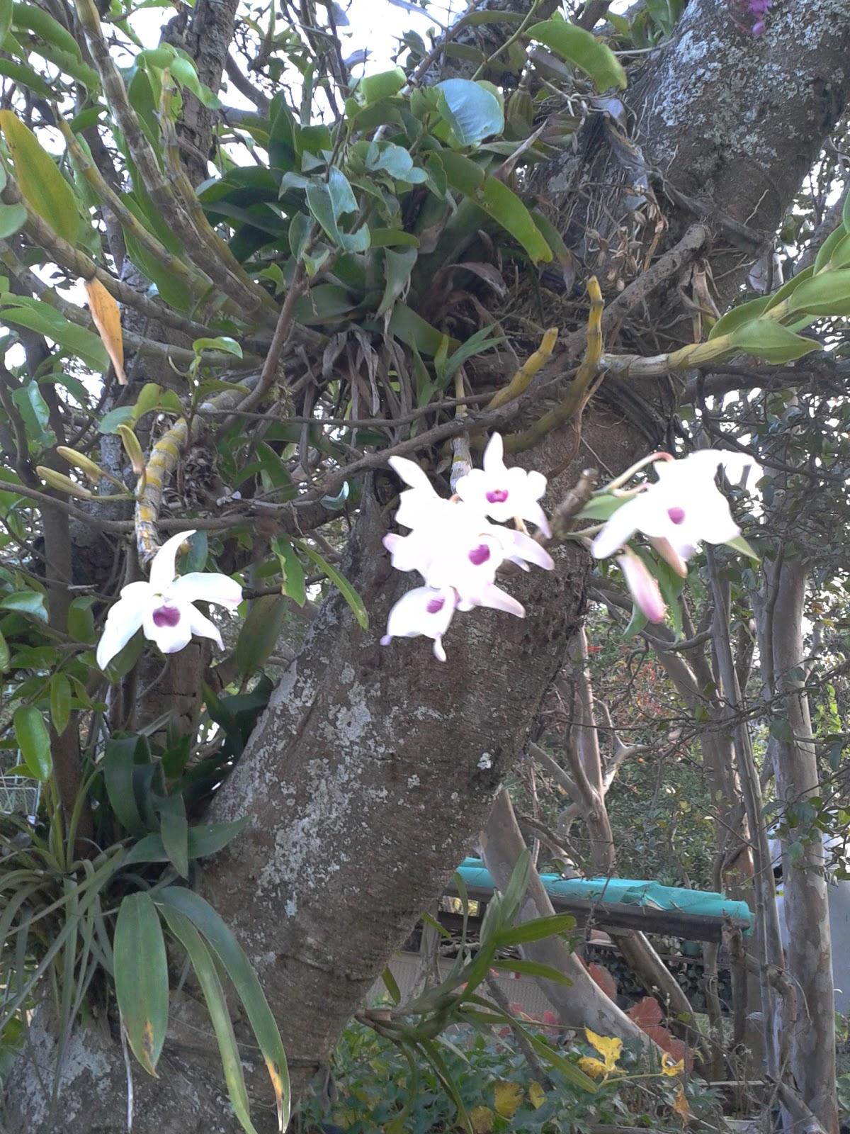 Arreglos florales plantas ornamentales for 20 plantas ornamentales