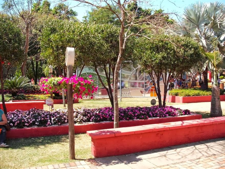 jardim plantas nativas:Jardim decorado com flores de e árvores nativas