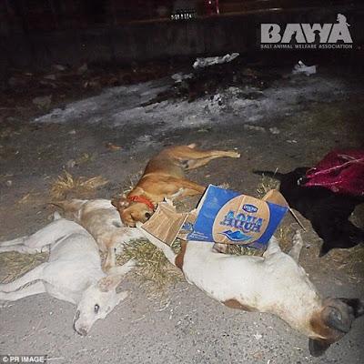 Nhiều xác chó nằm la liệt trên đường.