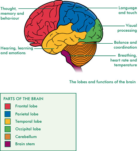 Brain Functions Diagram4
