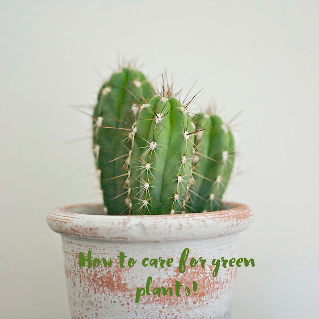 How to care for green plants - by Anya adores design