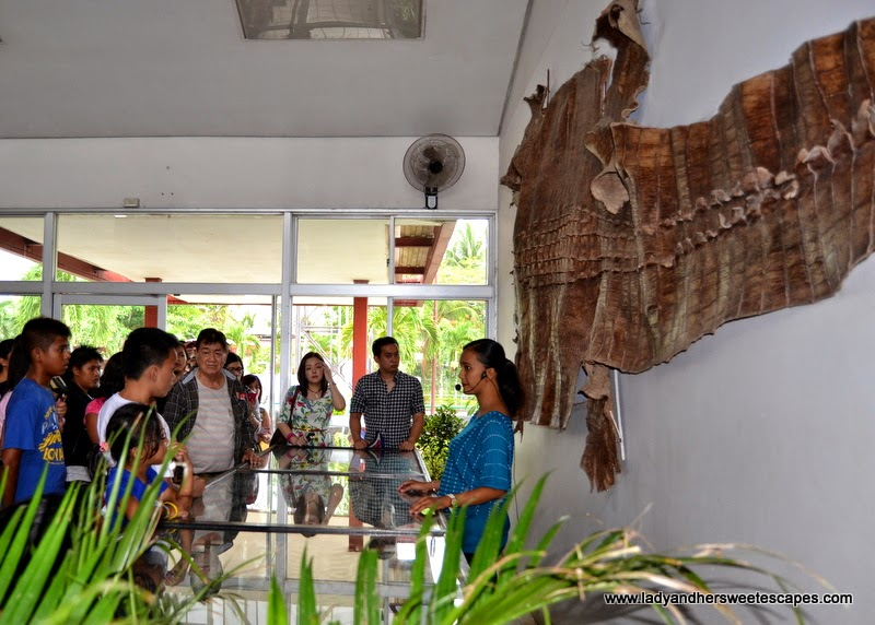 educational tour at the Crocodile Farm in Palawan