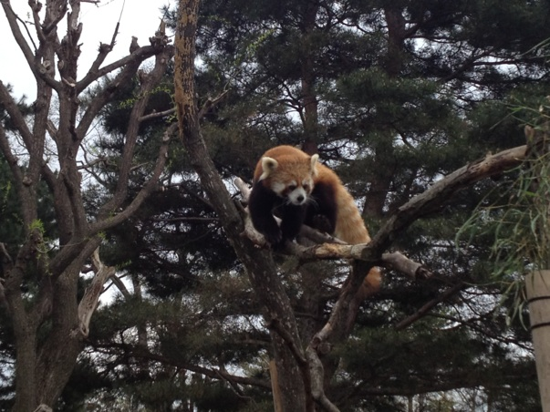 See Hokkaido: Maruyama Zoo (円山動物園)