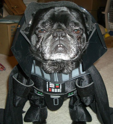 10 Perros vestidos como personajes de Star Wars