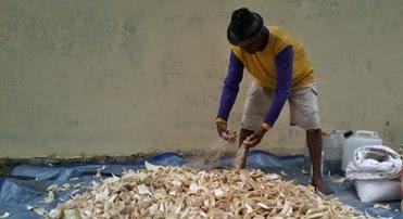 Cara Alternatif Membuat Pakan Fermentasi Ternak Domba