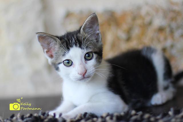 Kittens, Cute Cats, Cute Kittens