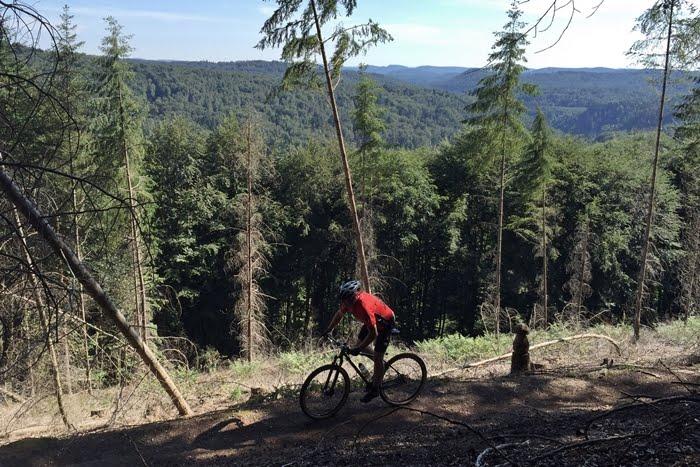 Location: Pfälzerwald - Rider: Rüdiger Kupper - Bike: LUCHS