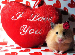 valentine-wallpaper-free-download