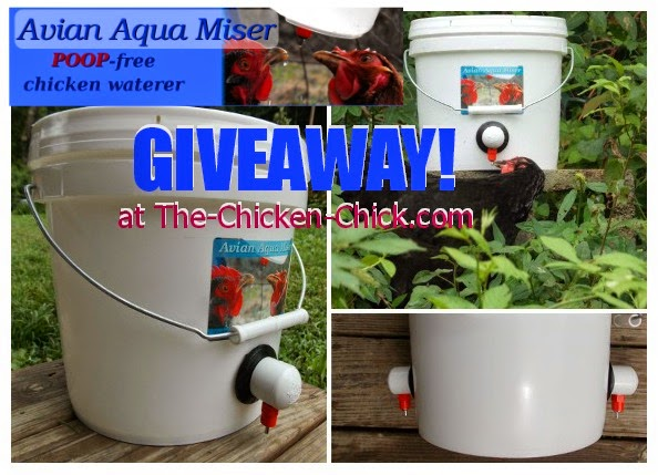 Avian Aqua Miser waterer giveaway at The-Chicken-Chick.com