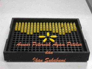 Nipple Drinker - Anwar Peternak Ayam Petelur dan Ikan - Sukabumi