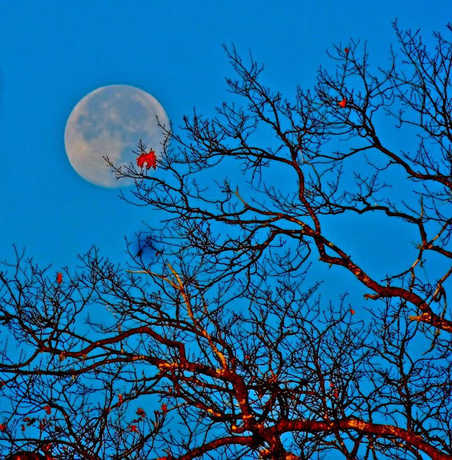 One red leaf, stealing the show from the moon.