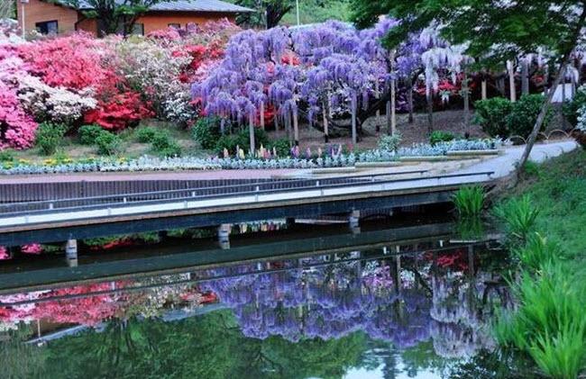 شلالات الزهور اليابانية Water_Fall_Flowers_Japan_10.jpg