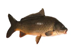 Cá Chép Giòn Sống