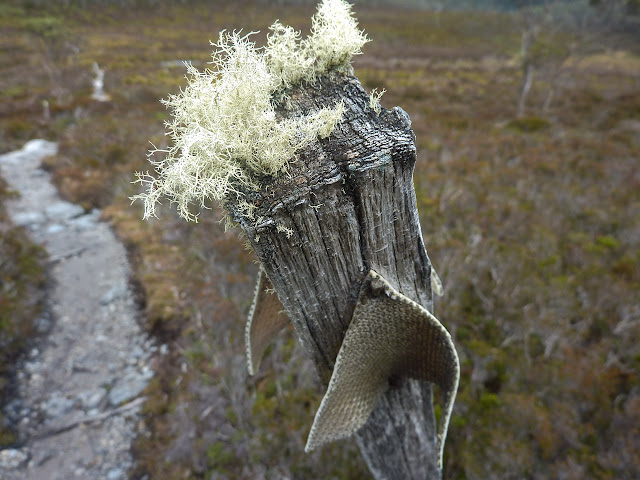overland track marker covered in moss