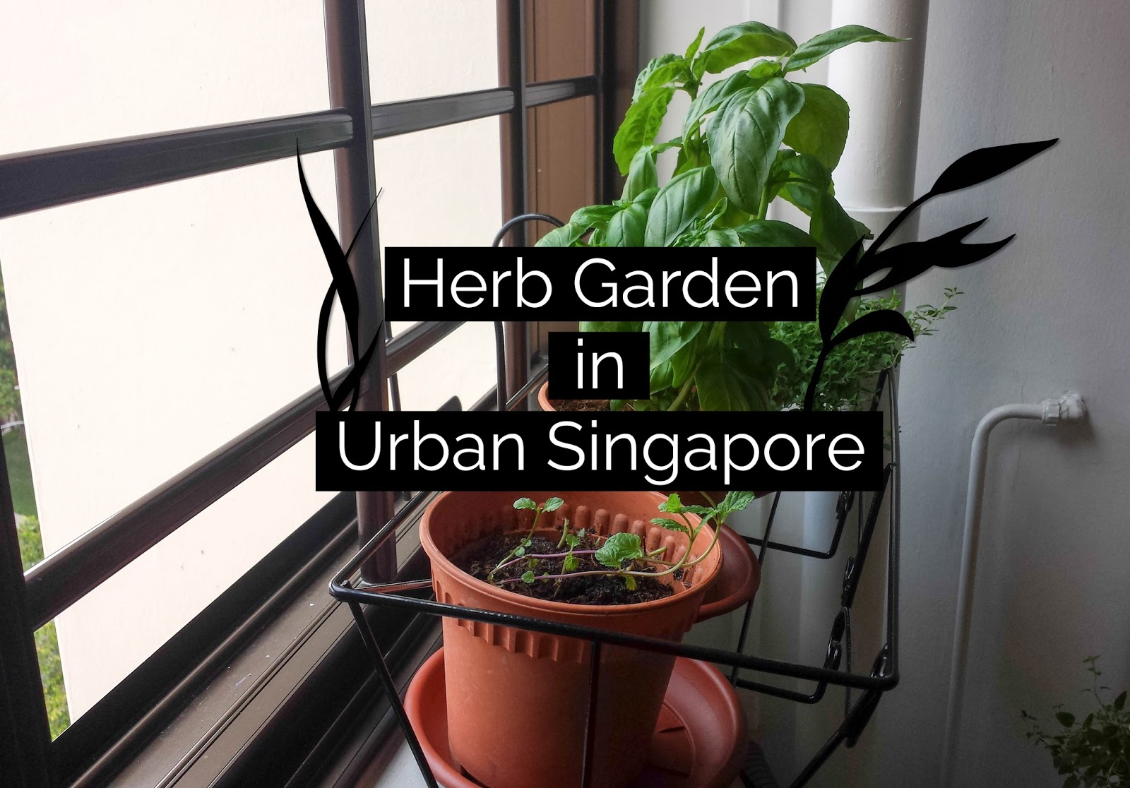 20 Ways To Start An Indoor Herb Garden Brit Co Herb Garden ...