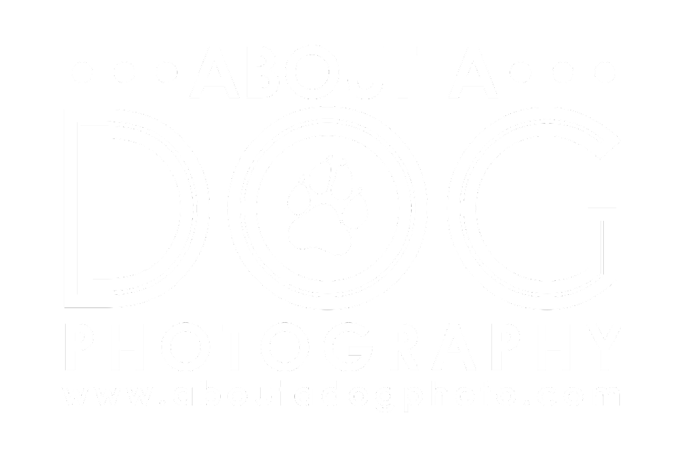 About A Dog Photography