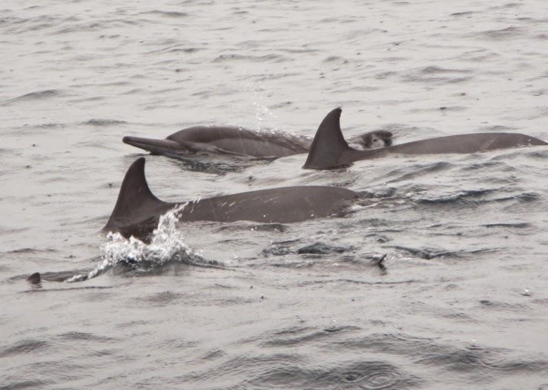 TRACC saw dolphins at Pom Pom Island