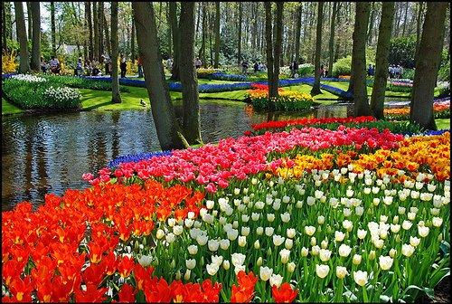 Keindahan Taman Bunga