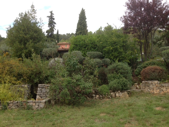 Gardening airy fairies pot luck lunch at rini frans for Pruning olive trees in pots