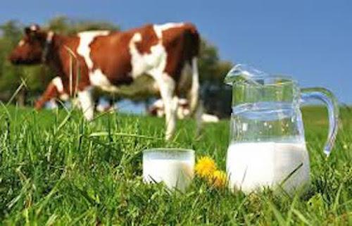 Cuidado!!! 10 alimentos podem levar a morte ou trazer graves danos à saúde! Confira...