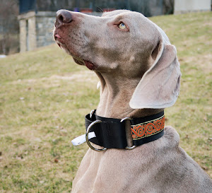 COLLARES SOS WEIMARANER